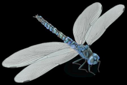 Healing-Naturally-Dragonfly